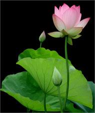 Đối Mặt Với Các Vấn Đề Trong Cuộc Sống Theo Quan Điểm Phật giáo